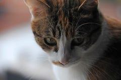 Stäng sig upp fotoet av en katt som ner ser Fotografering för Bildbyråer