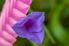 Stäng sig upp från en fantastisk blomning arkivbild