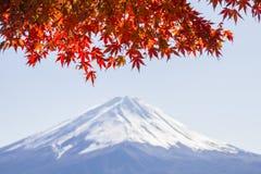 STÄNG SIG UPP höstsidor och gör suddig det bakgrundsFuji berget Royaltyfria Bilder