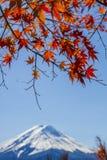 STÄNG SIG UPP höstsidor och gör suddig det bakgrundsFuji berget Arkivbild