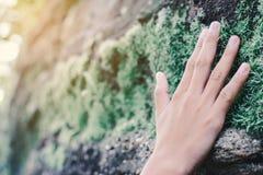 Stäng sig upp handen av flickan som trycker på mos på stenen Arkivfoto
