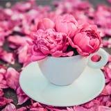 Stäng sig upp ljust - den rosa pionblommabuketten i en dekorativt kopp och tefat på mörk bakgrund med pionkronblad Förälskelsegåv royaltyfri bild