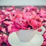 Stäng sig upp ljust - den rosa pionblommabuketten i en dekorativt kopp och tefat på mörk bakgrund med pionkronblad Present för fö arkivbild