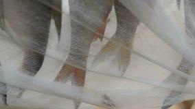 Stäng sig upp lutfisken som torkas under cheesecloth i det fria i fiskeläge stock video