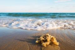 Stäng sig upp manet med den mjuka vågen på den sandiga stranden av det tropiska havet royaltyfri fotografi