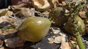 Stäng sig upp och ultrarapid av delar för frukt för kokosnöten för det lokala mansnittet unga itu, fantastiska skott av fruktsaft lager videofilmer