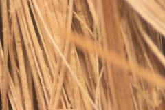 Stäng sig upp olja gömma i handflatan fiber under mikroskopet för kemisk analys i labb arkivfoton