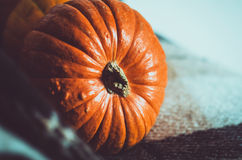 Stäng sig upp orange pumpa på brun plädbakgrund Nedgångsymboltapet, höstcosiness 28 November 2013 kalender med förstoringsapparat Royaltyfri Foto