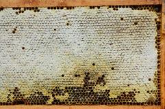 Stäng sig upp på den rå honungskakan med kopieringsutrymme royaltyfri bild