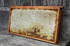 Stäng sig upp på den rå honungskakan med kopieringsutrymme för text Fördelar av att äta och att köpa den naturliga honungskakan arkivbild