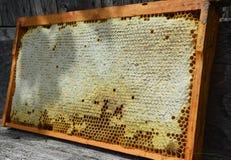 Stäng sig upp på den rå honungskakan med kopieringsutrymme för text Fördelar av att äta och att köpa den naturliga honungskakan royaltyfri bild