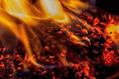 Stäng sig upp på en brand med sörjer kottar Royaltyfria Foton