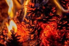 Stäng sig upp på en brand med sörjer kottar Royaltyfri Bild