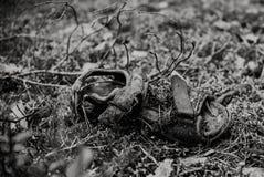 Stäng sig upp på mänsklig soe i skogmördare- eller föroreningtemat, bl Royaltyfri Foto