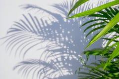 Stäng sig upp palmbladet och skuggor på en vit vägg Royaltyfri Bild
