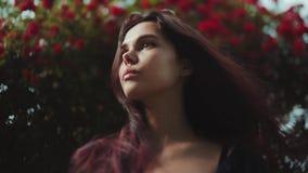 Stäng sig upp sikt av ett härligt anseende för ung kvinna för brunett av den blomstra busken av röda rosor och att se långt borta lager videofilmer
