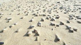 Stäng sig upp sikt av krusningar och skal i sand Arkivbilder