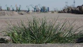 Stäng sig upp sikten av gräs som växer på betong lager videofilmer