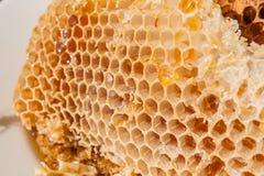 Stäng sig upp sikten av honungskakan med söt honung Arkivbild