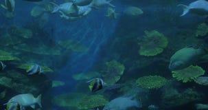 Stäng sig upp skottet av tropiska fiskar och koraller i akvarium Siam Ocean World Bangkok, Thailand arkivfilmer