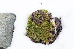 Stäng sig upp stenen och gräs i snövintertextur Royaltyfri Bild