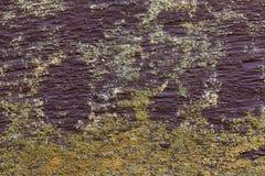 Stäng sig upp svamp och gammal wood plankatexturbakgrund Royaltyfria Bilder