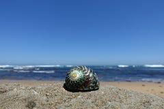 Stäng sig upp uppvisning av skalet på stranden längs den stora havvägen, Australien arkivfoton