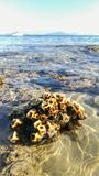 Stäng upp av havet Corel som är närliggande stranden under lågvatten med yachten och ljus himmelbakgrund arkivbild
