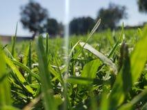 stäng upp gräs royaltyfri fotografi