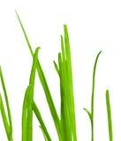 stäng upp gräsgreen Arkivbild