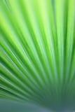 stäng upp leaves abstrakt linjer Arkivbilder