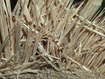 Stäng upp makroen av strimlat trädet sett gå, fast landet parkerar i England arkivbilder