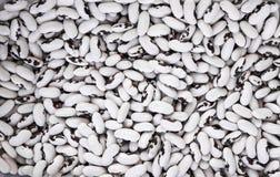 Stäng upp på rå organiska vita svarta bönor Makro Sunda diet-matrich i microelements cellulosa och vitaminer royaltyfri foto