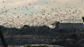 Stäng upp skott av fiskmåsar i himlen många tusentals stock video