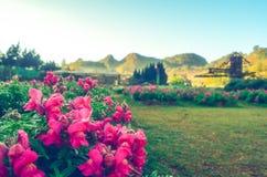 Stäng upp små vita blommor, naturlig grönskabakgrund Med tappningfiltret Royaltyfri Foto