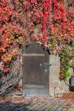 Stängd dörr med vinrankor i den Nuremberg slotten Royaltyfri Bild