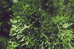 Stänger sig gröna växter för bakgrund upp Royaltyfri Foto