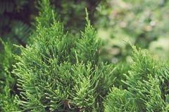 Stänger sig gröna växter för bakgrund upp royaltyfria bilder