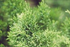 Stänger sig gröna växter för bakgrund upp Arkivfoto