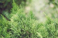 Stänger sig gröna växter för bakgrund upp Royaltyfri Bild