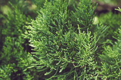 Stänger sig gröna växter för bakgrund upp Royaltyfria Foton