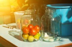 Stängning av beskydd på tabellen med tomater, sol royaltyfri fotografi