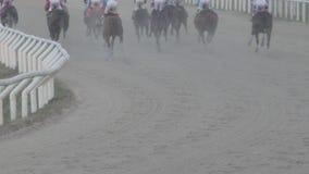Stängt skott av hästar i ett lopp stock video