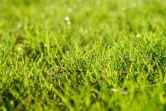 Stängt upp av gräs på jordningen Arkivfoto