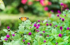 Stängt upp fjäril på blomman arkivfoton