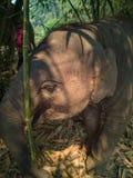 Stängt upp fotoet behandla som ett barn elefanten arkivbilder