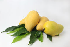 Stängt upp mango och bladet på vit bakgrund arkivbild