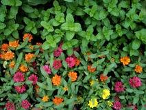 Stängt upp trädgården av blommor och örter arkivbilder