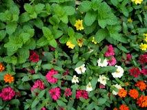 Stängt upp trädgården av blommor och örter royaltyfri fotografi