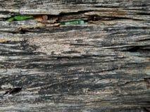 Stängt upp träyttersidatextur arkivfoto